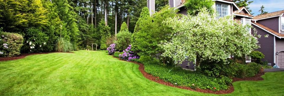 lawn-renovations